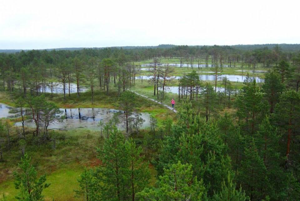 Viru Bog: A Taste of the Estonian Wilderness