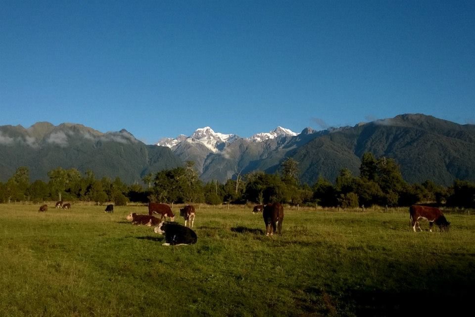 Mt Tasman and Mt Cook