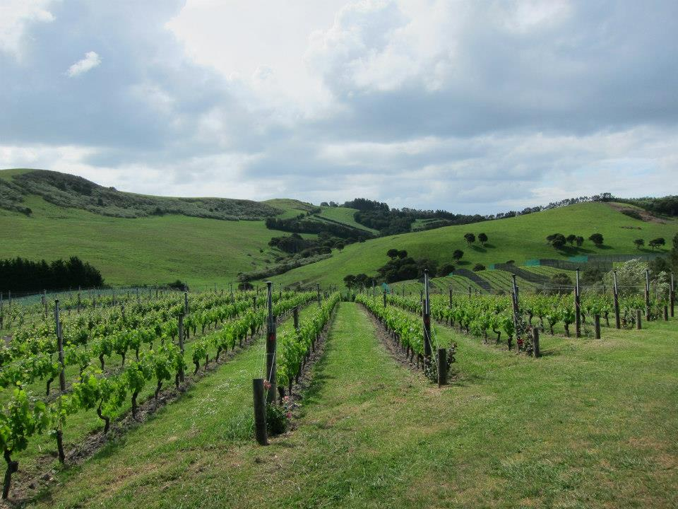 new zealand working holiday vineyard