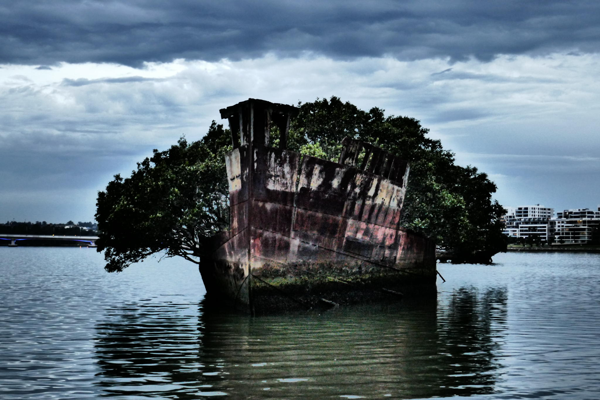 Alone with the SS Ayrfield Shipwreck, the Floating Forest of Sydney