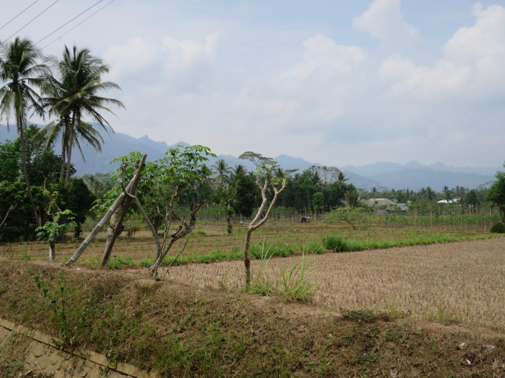 Mendut, Pawon and Tempeh: What's Around Borobudur