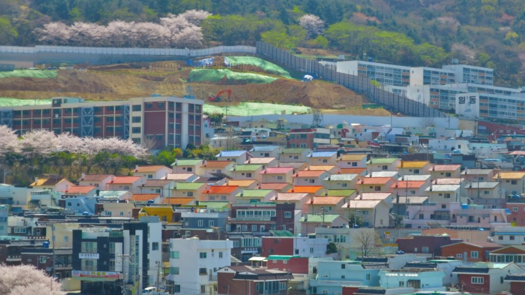 Cherry blossoms in Mandeok